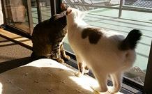 0614 猫兄弟b