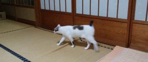 0616 夕方仏壇参り1