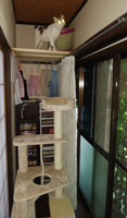 0619 Cタワー設置 MinaMay6