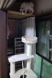 0619 Cタワー設置1