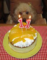 祝11歳ケーキ仕切り直し1