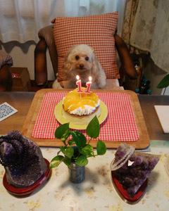 祝11歳ケーキ仕切り直し-1