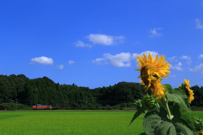 鉄道写真2844