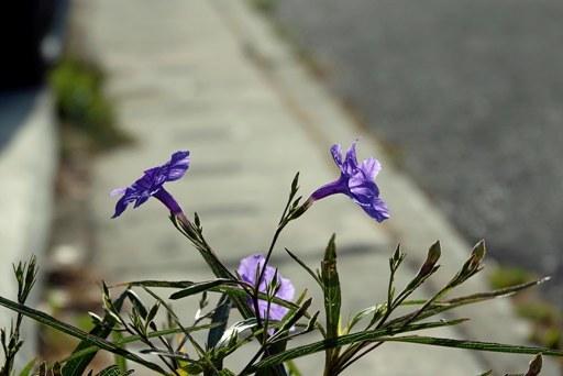 春逆光-f DSC09764