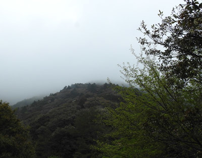霧に覆われた山頂