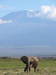 elephant-253514_1280.jpg