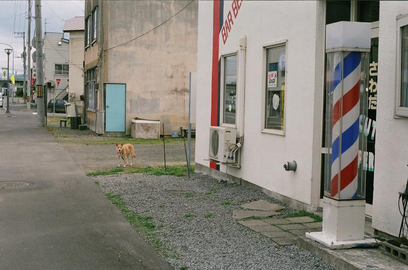 $-YOME- フィルムカメラで嫁を撮る-犬を撮りたくなる
