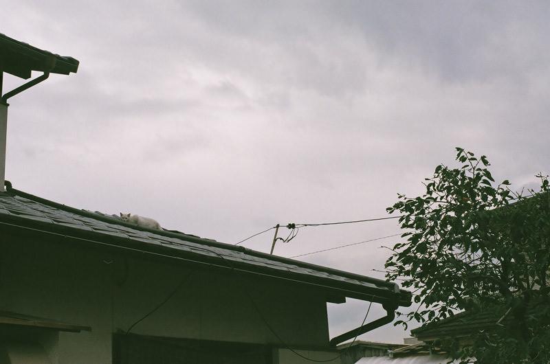 $フィルムカメラで嫁を撮る -YOME--屋根猫
