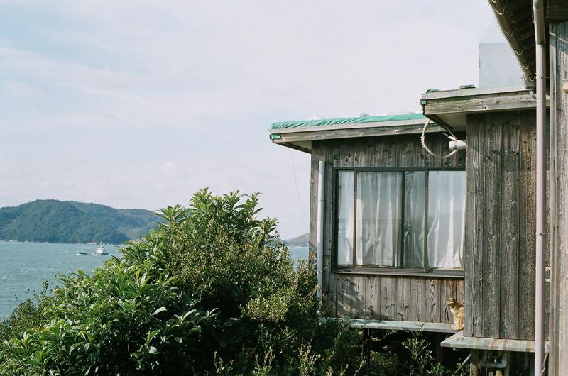 $フィルムカメラで嫁を撮る -YOME--瀬戸内海の猫