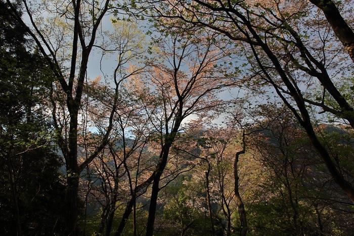 蕨山有間山2018 (15)