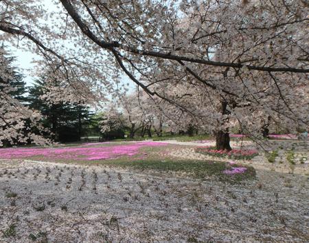 30_04_03 群馬県トレジャーガーデン 1