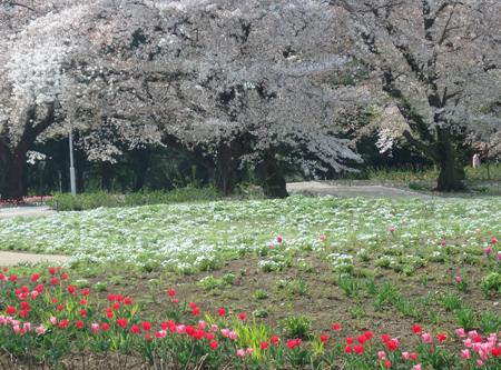30_04_03 群馬県トレジャーガーデン 3