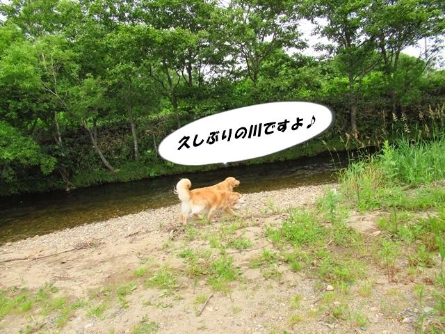 IMG_4538.jpg