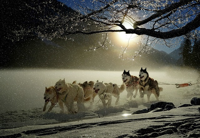 dogs-2921382_640.jpg