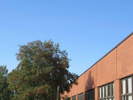 ナナカマドの木と青空