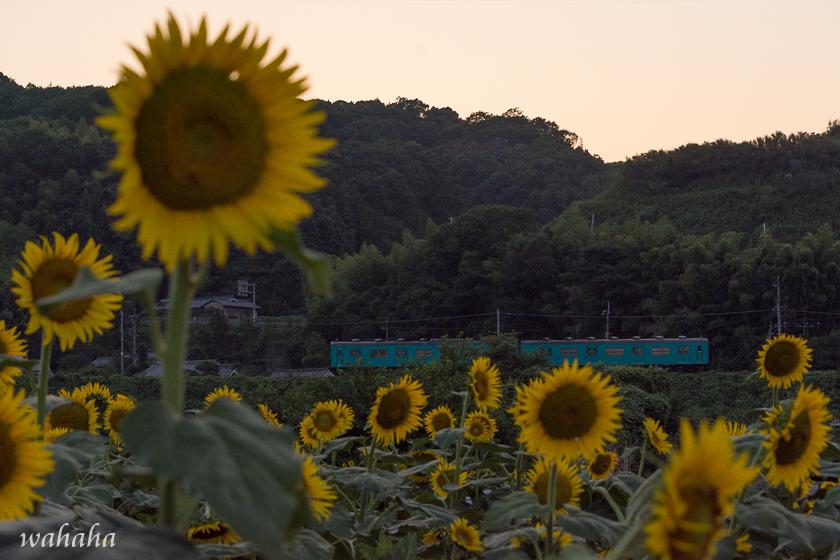 300804gojo-shi_3b.jpg