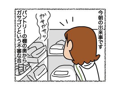 01082018_cat1.jpg
