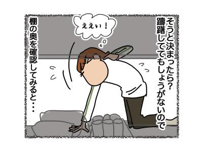 01082018_cat3.jpg