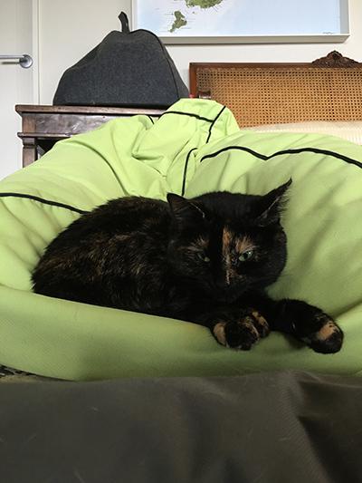02082018_cat1.jpg