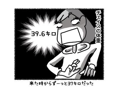 03082018_cat1.jpg