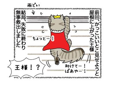 03092018_cat1.jpg