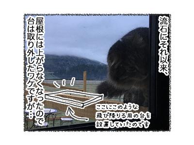 03092018_cat2.jpg