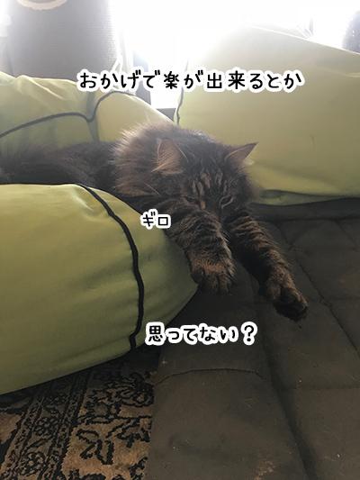 04082018_cat1.jpg