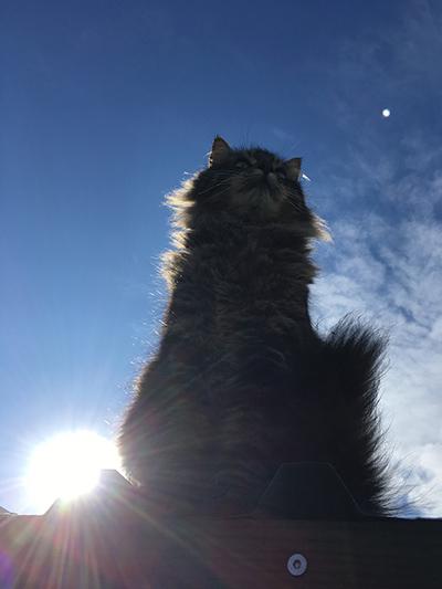 04092018_cat7.jpg