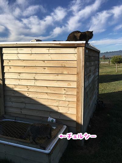 04092018_cat8.jpg