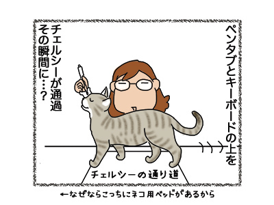 05092018_cat2.jpg