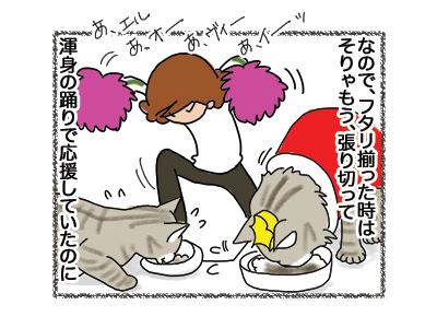 06082018_cat3.jpg