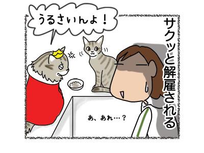 06082018_cat4.jpg