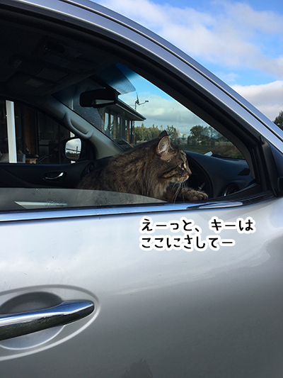 06092018_cat2.jpg