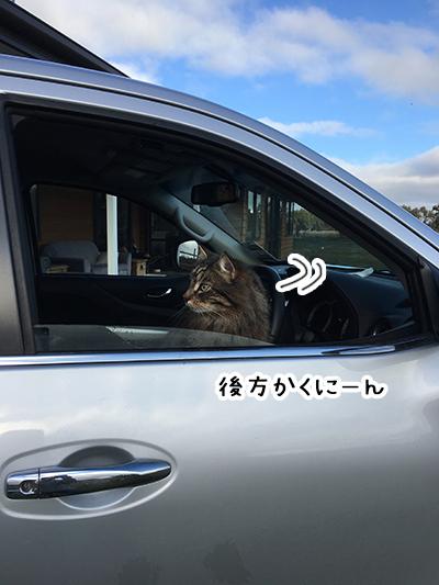 06092018_cat4.jpg