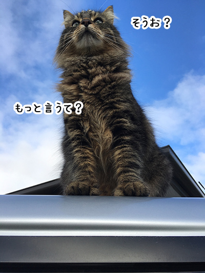 06092018_cat6.jpg
