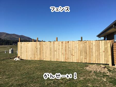 06092018_cat7.jpg