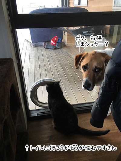 07082018_cat4.jpg