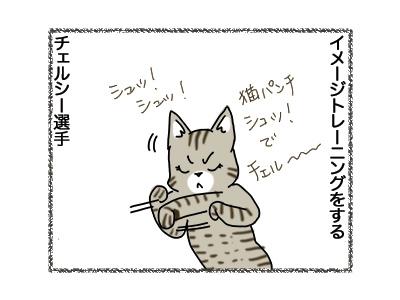 11092018_cat2.jpg