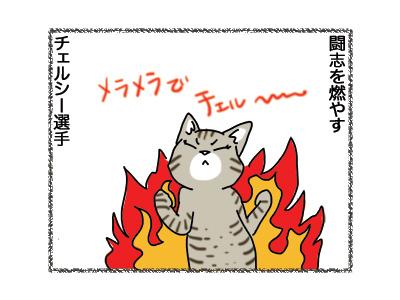 11092018_cat3.jpg