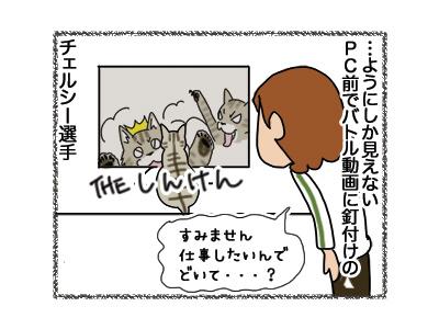11092018_cat4.jpg