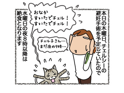 12072018_cat1.jpg