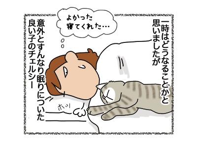 12072018_cat2.jpg