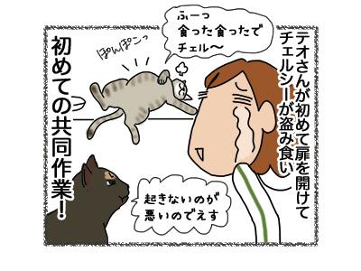 12072018_cat6.jpg