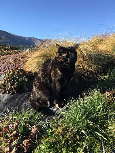12082018_cat2.jpg