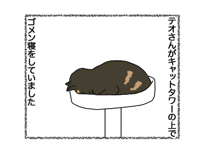 12092018_cat1.jpg