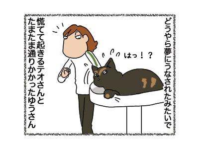 12092018_cat2.jpg