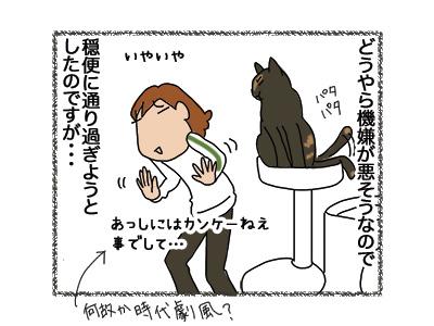 12092018_cat3.jpg