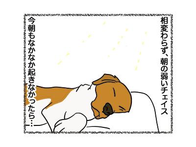 13072018_cat1.jpg