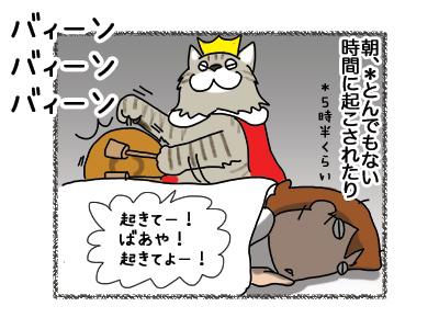13082018_cat1.jpg