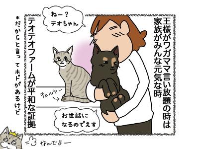 13082018_cat4.jpg